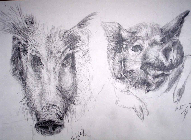 Wildschweine_2002_Grafit